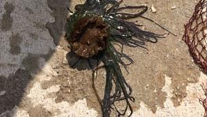 Biga'da Korkunç Olay,Denize giren 12 yaşındaki kızın yüzüne çarptı