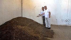 Biga'da sezonun ilk ayçiçeği alımı yapıldı.